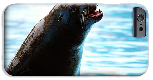 Sea Lions iPhone Cases - Sea-Lion iPhone Case by Carlos Caetano