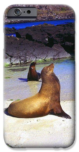 Sea Lions on Genovesa Island iPhone Case by Thomas R Fletcher