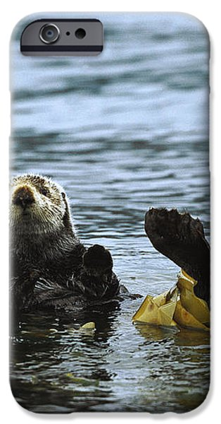 Sea Otter Enhydra Lutris Wrapped iPhone Case by Konrad Wothe