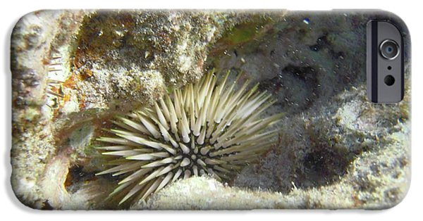 Food Paining iPhone Cases - Sea Urchin iPhone Case by Michael Peychich