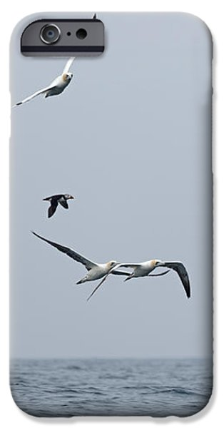 Seabirds in Flight iPhone Case by Louise Heusinkveld