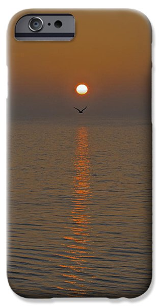 Flying Seagull iPhone Cases - Seagull at first light iPhone Case by Gary Eason