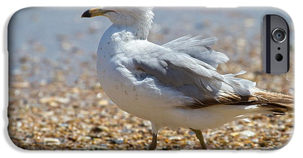 Flying Seagull iPhone Cases - Seagull iPhone Case by Betsy A  Cutler