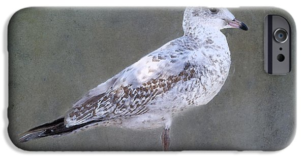 Seagull iPhone Cases - Seagull iPhone Case by Betty LaRue