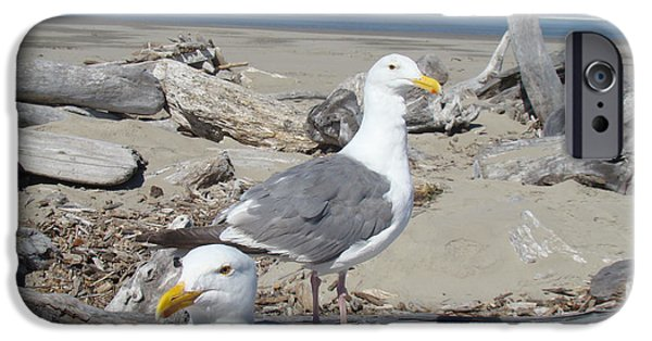Seagull iPhone Cases - Seagull Bird Art prints Coastal Beach Bandon iPhone Case by Baslee Troutman