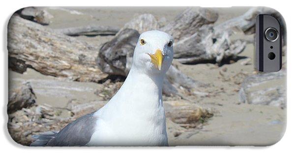 Seagull iPhone Cases - Seagull Bird art prints Coastal Beach Driftwood iPhone Case by Baslee Troutman Fine Art Photography