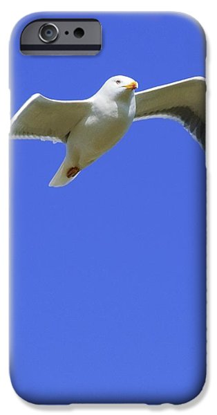 Seagull In Flight iPhone Case by Ben Welsh