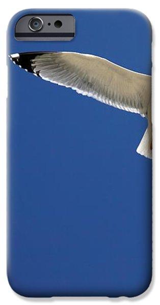 Seagull In Flight iPhone Case by Detlev Van Ravenswaay