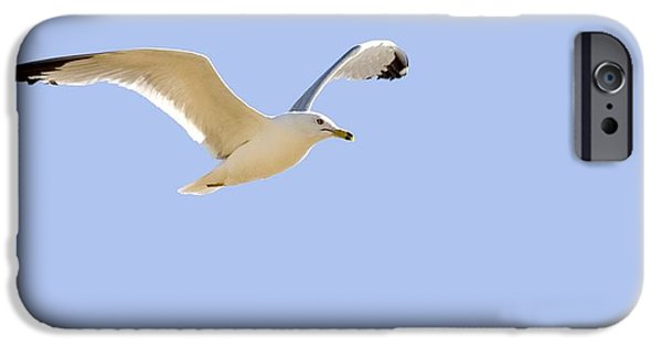 Flying Seagull iPhone Cases - Seagull In Flight iPhone Case by Don Hammond