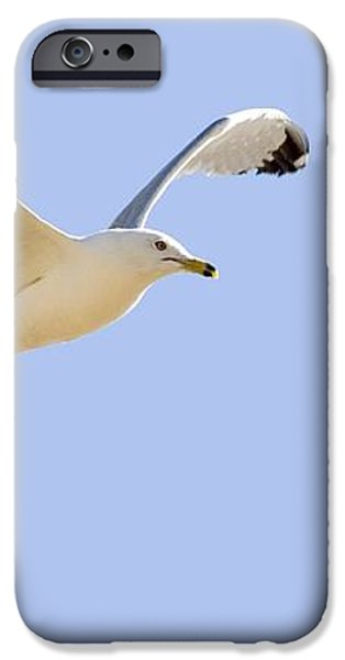 Seagull In Flight iPhone Case by Don Hammond