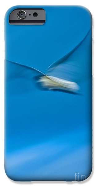Flying Seagull Digital Art iPhone Cases - Seagull In Flight iPhone Case by Dustin K Ryan