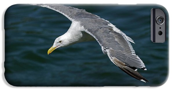 Flying Seagull iPhone Cases - Seagull  in Flight iPhone Case by Randall Ingalls