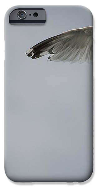 Seagull iPhone Case by Keith Levit