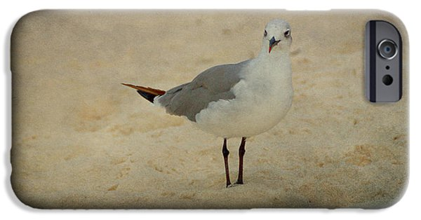 Seagull iPhone Cases - Gull iPhone Case by Sandy Keeton