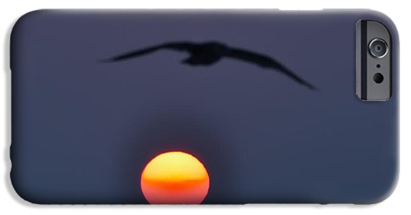 Flying Seagull Digital Art iPhone Cases - Seagull Sun iPhone Case by Bill Cannon