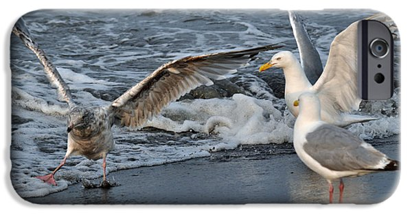 Seagull iPhone Cases - Seagull Treasures iPhone Case by Debra  Miller