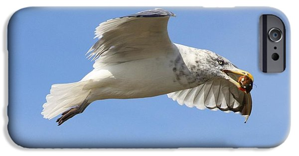 Seagull iPhone Cases - Seagull with Snail iPhone Case by Carol Groenen