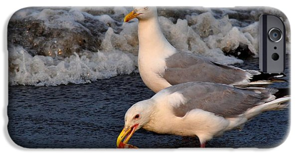 Seagull iPhone Cases - Seagull Yumminess  iPhone Case by Debra  Miller