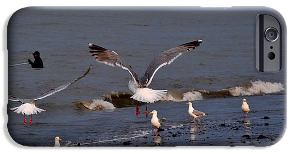 Seagull iPhone Cases - Seagulls Dip Netting  iPhone Case by Debra  Miller