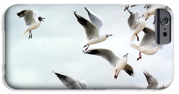 Flying Seagull iPhone Cases - Seagulls flying for food iPhone Case by Simon Bratt Photography LRPS