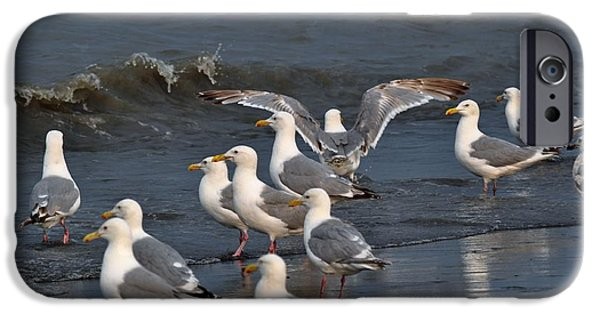 Seagull iPhone Cases - Seagulls Gathering iPhone Case by Debra  Miller