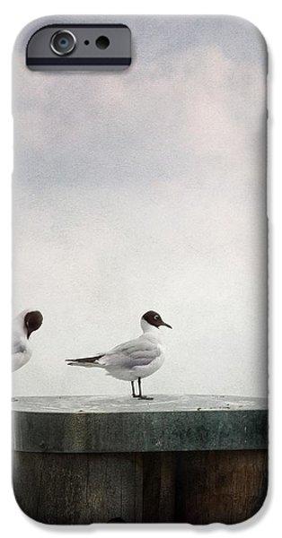 seagulls iPhone Case by Priska Wettstein