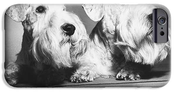 Animal Portraiture iPhone Cases - Sealyham terriers iPhone Case by M E Browning and Photo Researchers