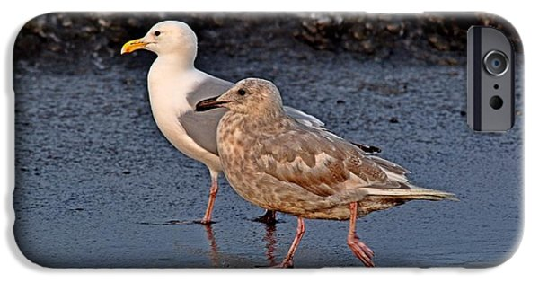 Seagull iPhone Cases - Seamless Seagulls iPhone Case by Debra  Miller
