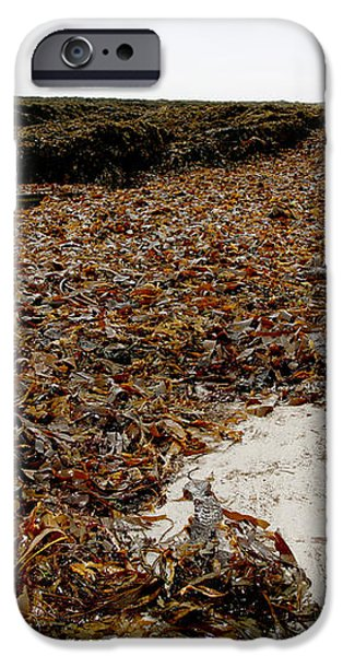 Seaweed Covered Beach iPhone Case by Dr Keith Wheeler