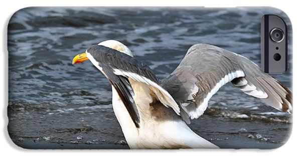 Seagull iPhone Cases - Segull iPhone Case by Debra  Miller