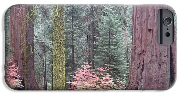Sierras iPhone Cases - Sequoia  Trees  iPhone Case by Naxart Studio