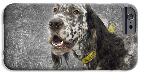 Black Dog iPhone Cases - Setter 1 iPhone Case by Rebecca Cozart