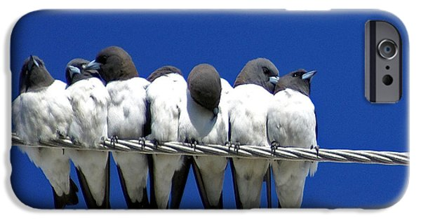 Swallows iPhone Cases - Seven Swallows Sitting iPhone Case by Holly Kempe