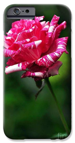 Floribunda iPhone Cases - Sexy Rexy Rose iPhone Case by Kaye Menner