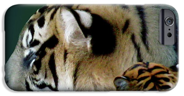 Animal Photograph Mixed Media iPhone Cases - Shades Of A Tiger iPhone Case by Debra     Vatalaro