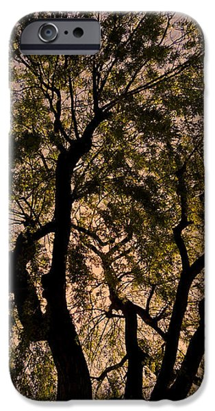Shady Tree ... iPhone Case by Juergen Weiss
