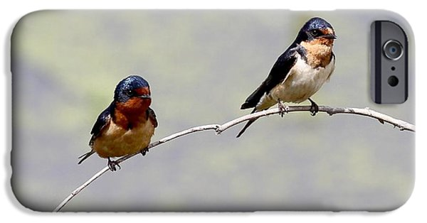 Barn Swallow iPhone Cases - Sharing a Branch iPhone Case by Elizabeth Winter