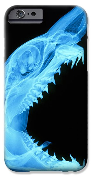 Shark iPhone Cases - Shark Skull iPhone Case by D. Roberts