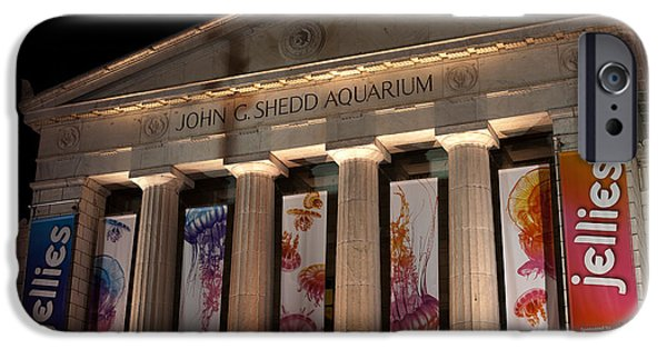 Jellyfish iPhone Cases - Shedd Aquarium with Jellyfish Exhibit iPhone Case by Paul Velgos