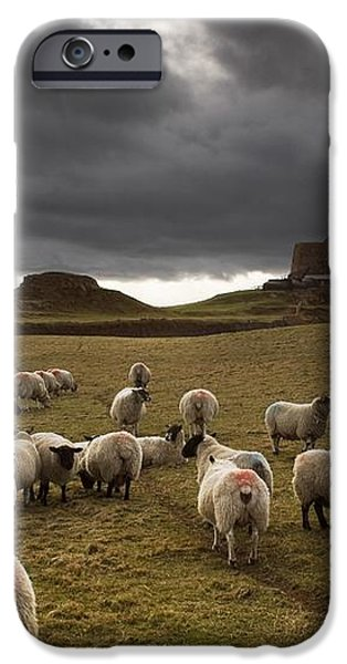 Sheep Grazing By Lindisfarne Castle iPhone Case by John Short