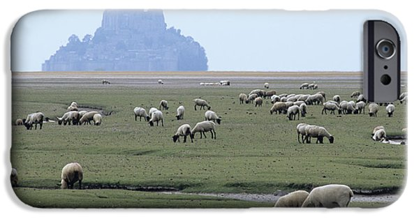 Michelle iPhone Cases - Sheep Grazing iPhone Case by David Nunuk