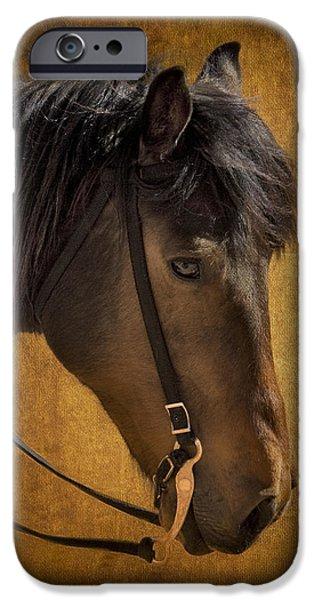 Horse Bit iPhone Cases - Sheep Herding Horse Portrait iPhone Case by Susan Candelario