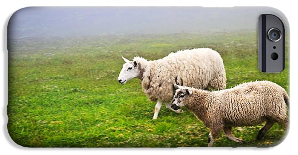 Fields iPhone Cases - Sheep in misty meadow iPhone Case by Elena Elisseeva