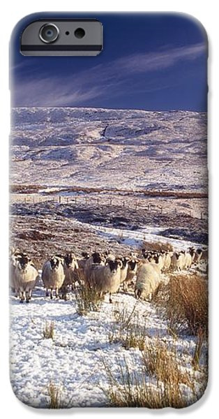 Sheep In Snow, Glenshane, Co Derry iPhone Case by The Irish Image Collection
