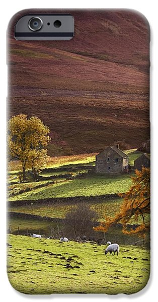 Sheep On A Hill, North Yorkshire iPhone Case by John Short