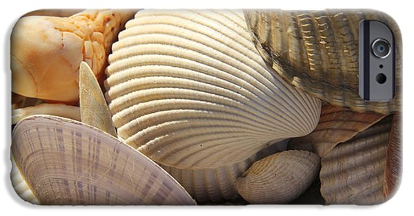 Sea iPhone Cases - Shells 1 iPhone Case by Mike McGlothlen