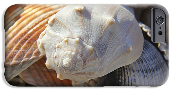 Sea iPhone Cases - Shells 2 iPhone Case by Mike McGlothlen