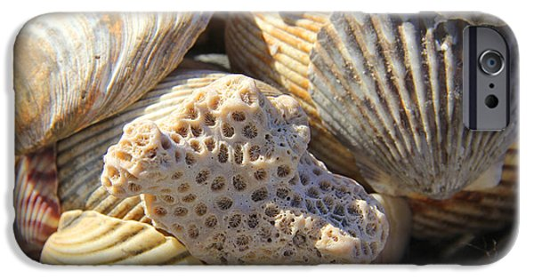 Sea iPhone Cases - Shells 3 iPhone Case by Mike McGlothlen