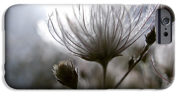 Gray Hair iPhone Cases - Shimmering Flower I iPhone Case by Ray Laskowitz - Printscapes