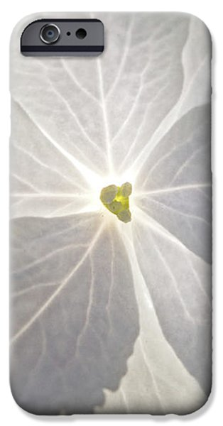 Shooting Star iPhone Case by Christopher Holmes